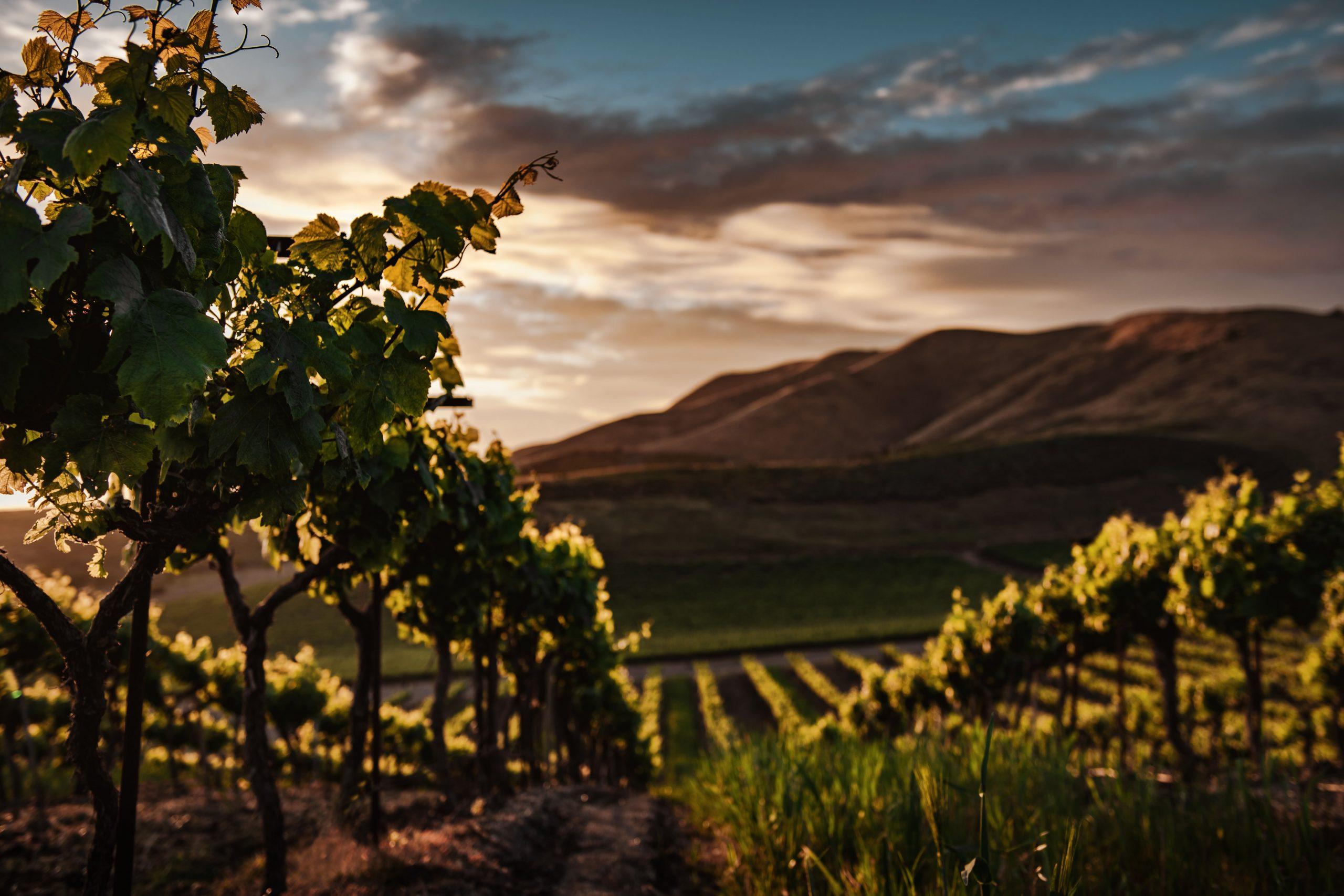 California_Landscape